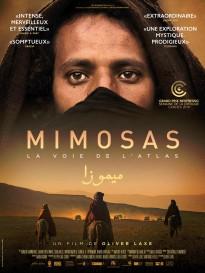 mimosas la voie de l atlas